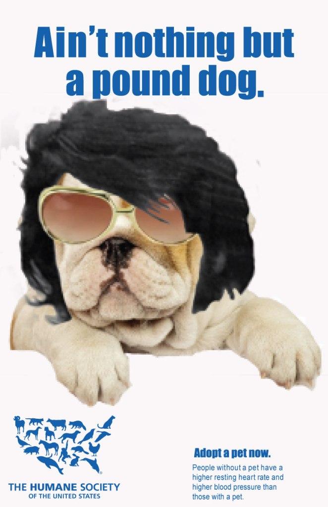 Elvis_MH